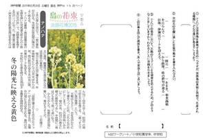 島の花束① ナノハナ