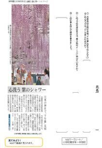 心洗う 紫のシャワー「千年藤」