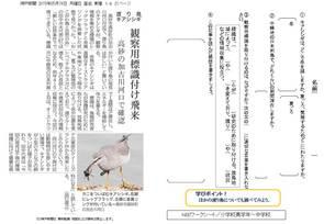 渡り鳥 キアシシギ