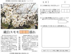 加古川の果樹園 純白スモモ