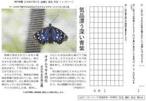 気品漂う深い青紫 オオムラサキ羽化