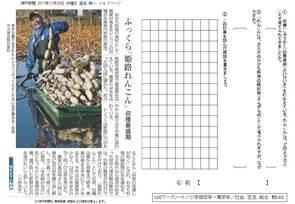 ふっくら「姫路れんこん」収穫最盛期