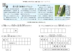 屋久島で新種のゾウムシ