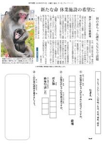 神戸・北区の猿劇場 初の赤ちゃん誕生