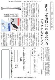 洲本に恐竜時代の海鳥化石